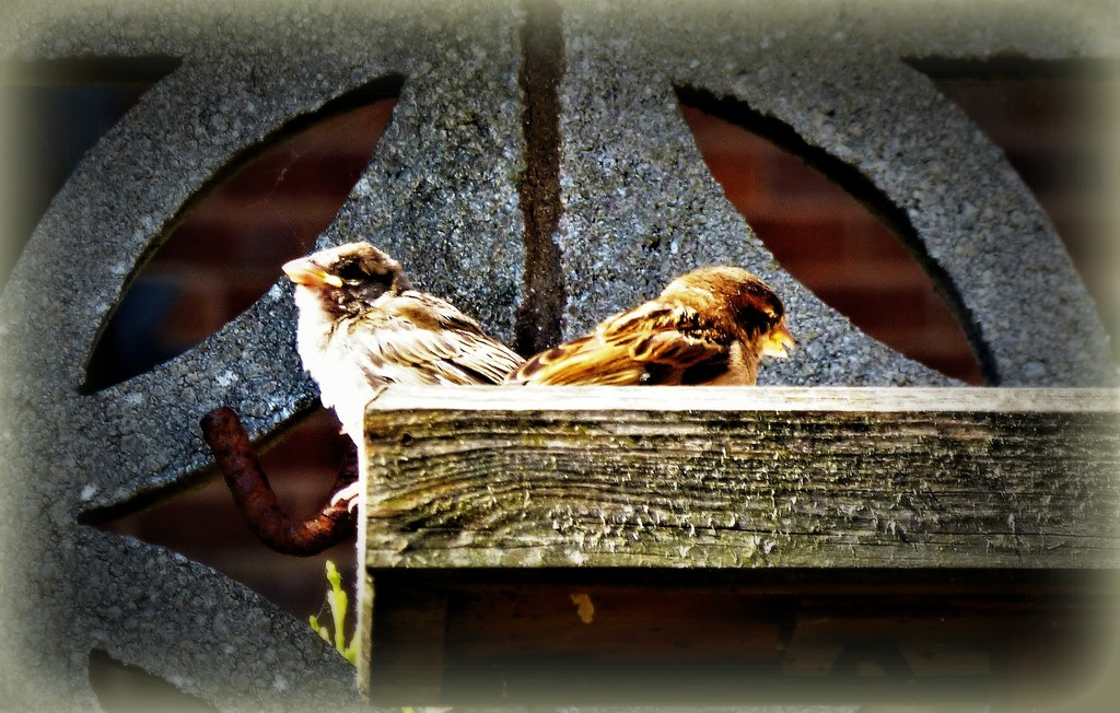 Two little dickie birds  by beryl