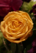 26th Aug 2019 - Yellow roses are my favorite