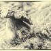 Old mushroom by haskar