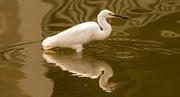 26th Aug 2019 - Snowy Egret Taking a Break!
