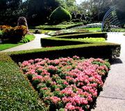 24th Aug 2019 - Roma Street Gardens into  spring!!