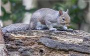 27th Aug 2019 - Cheeky Squirrel