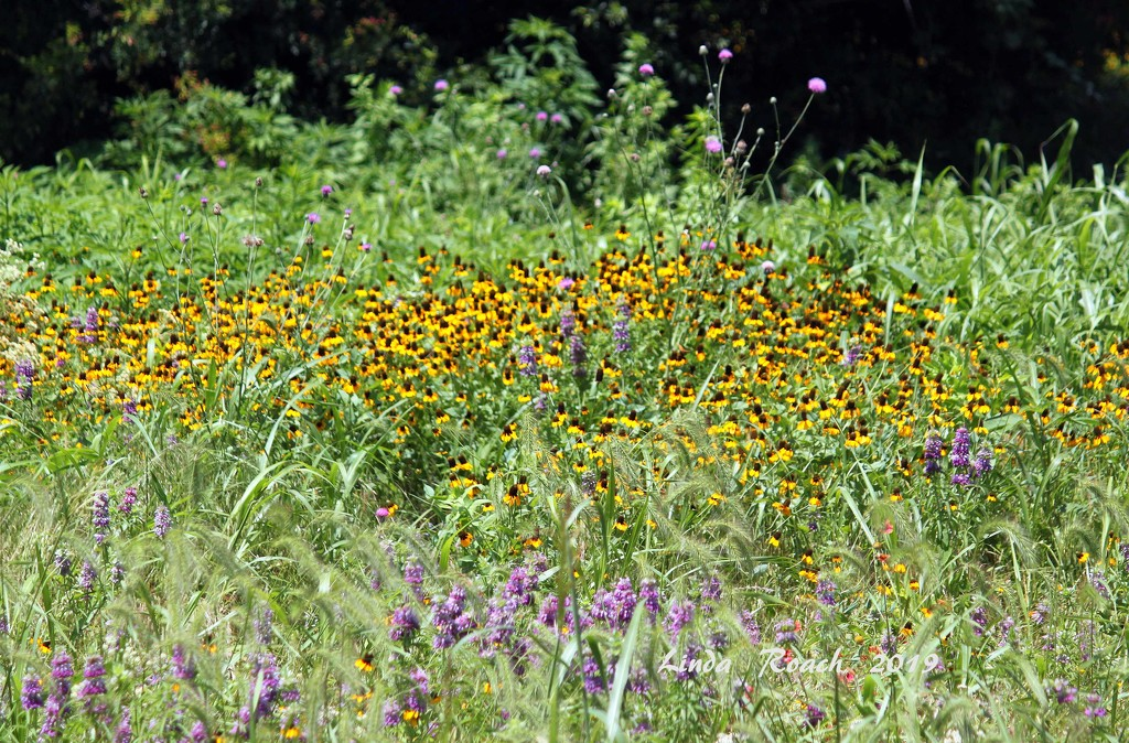 Wildflower Field by grannysue