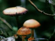 26th Aug 2019 - Mini Mushrooms