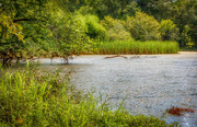 28th Aug 2019 - Swampy Etowah