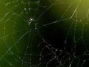 28th Aug 2019 - spiderweb