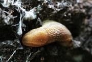 28th Aug 2019 - Snug as a Slug in a Lug