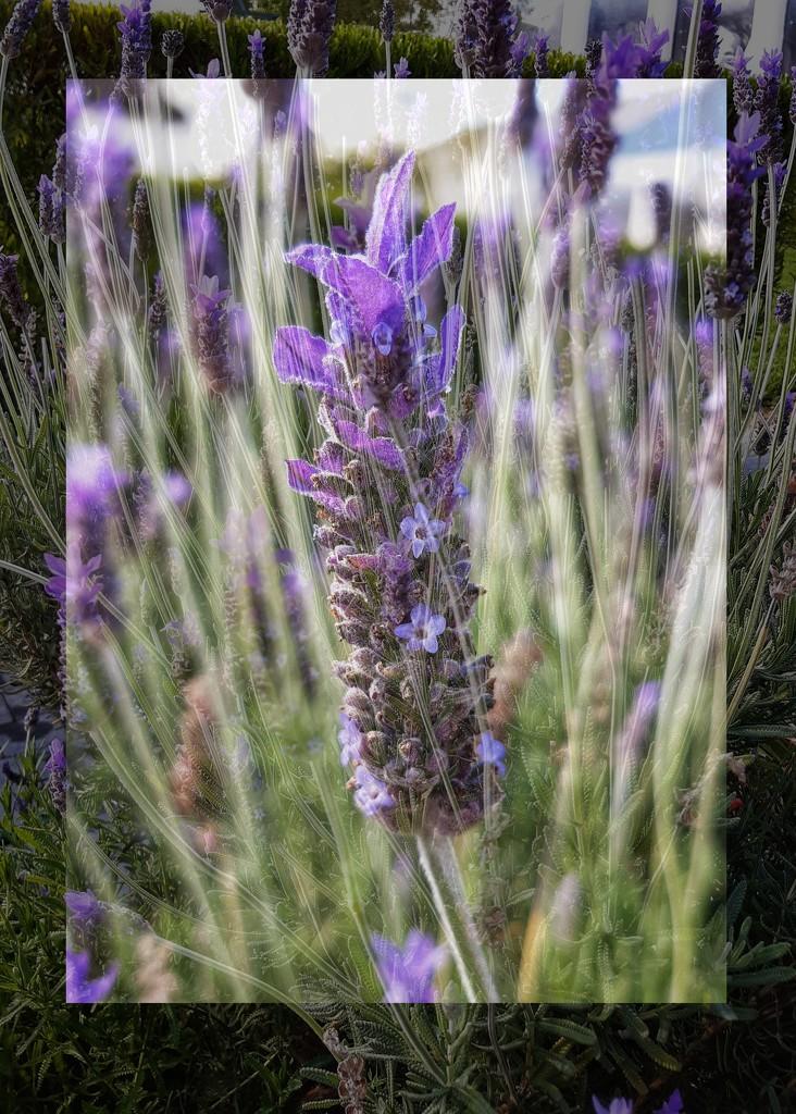 Flower garden  by salza