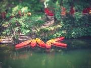 29th Aug 2019 - canoe flower