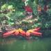 canoe flower by pistache