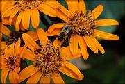 28th Aug 2019 - Bee-utiful