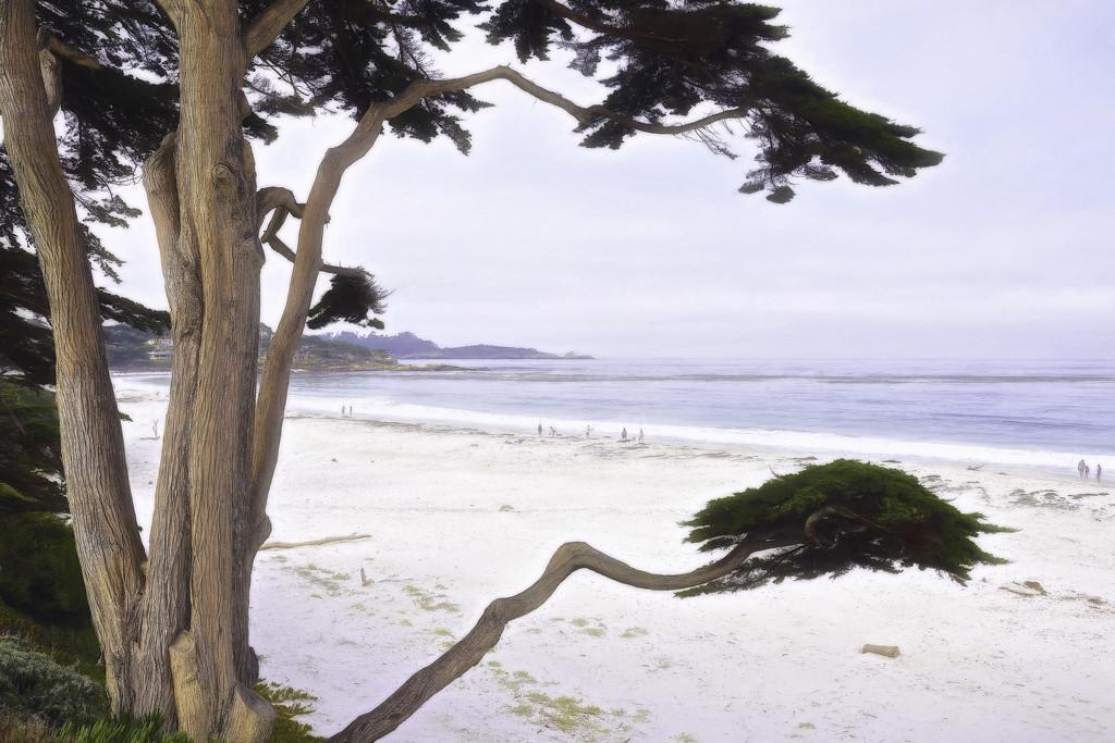 Carmel Beach  by joysfocus