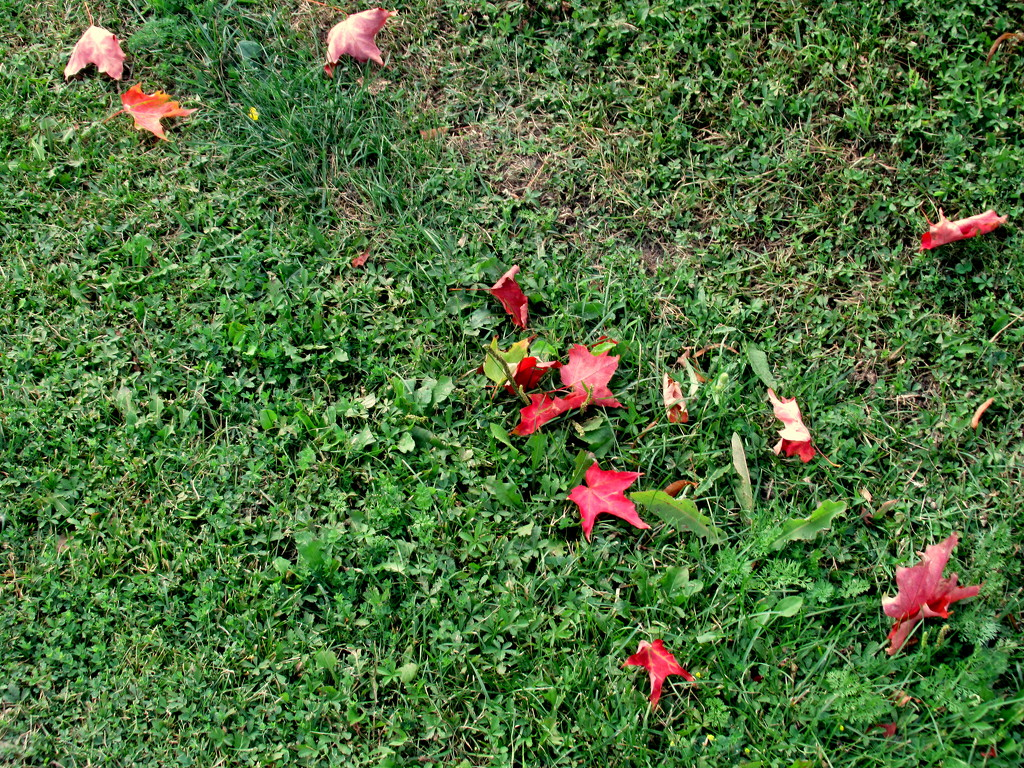 Sign of autumn by bruni
