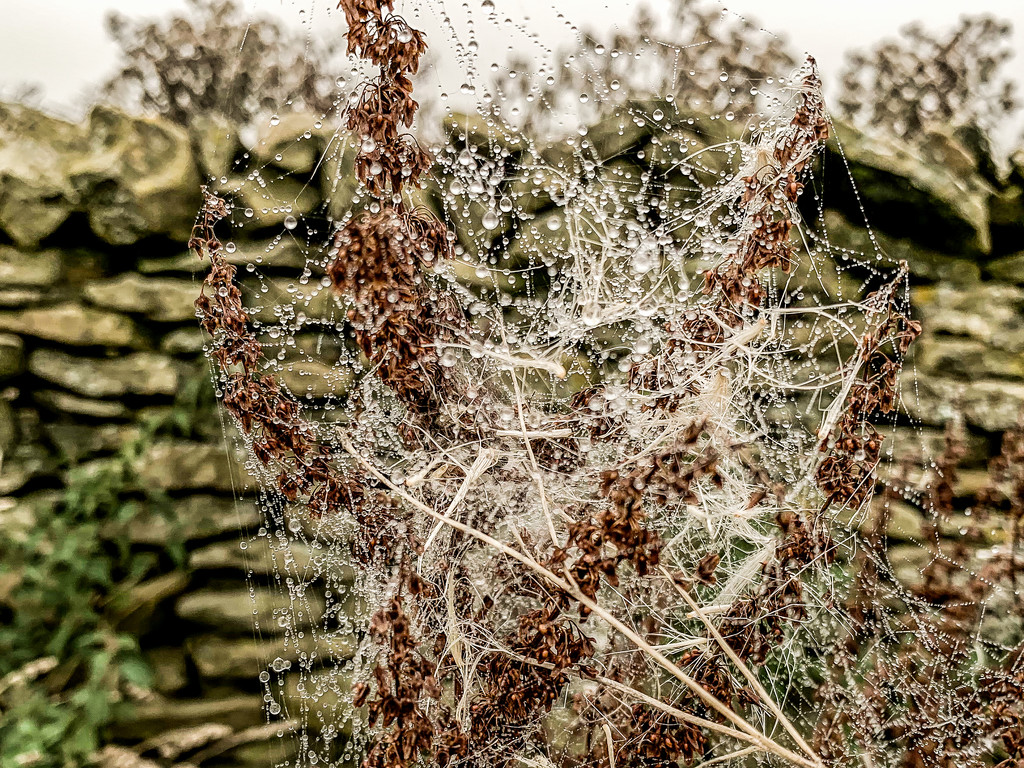 Draped in cobwebs and diamonds by pamknowler