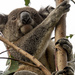 Jordan on patrol by koalagardens