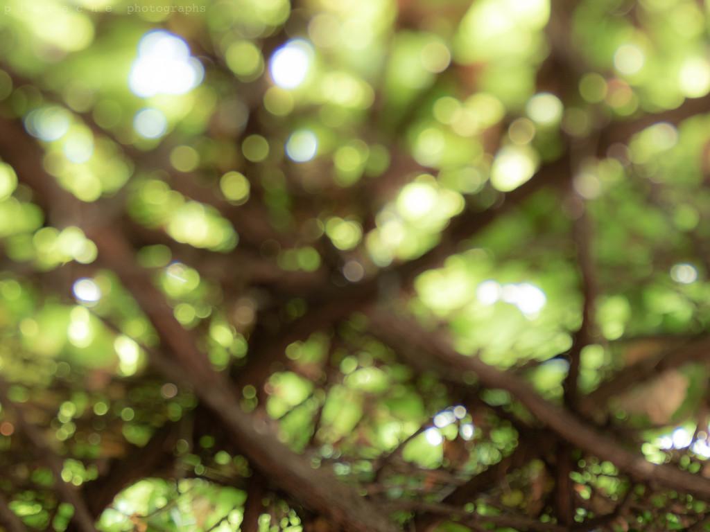 sheltering under the vine by pistache