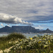 Iconic Table Mountain by mv_wolfie