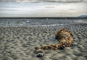 25th Aug 2019 - Washed up