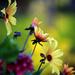 Buchart Gardens in the Summer by gq