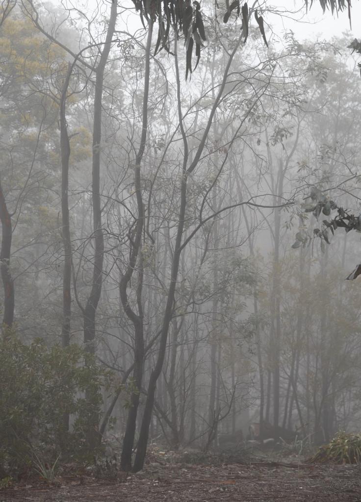 Misty forest  by fr1da