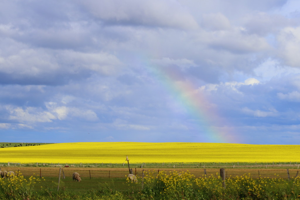 A rainbow touch by gilbertwood
