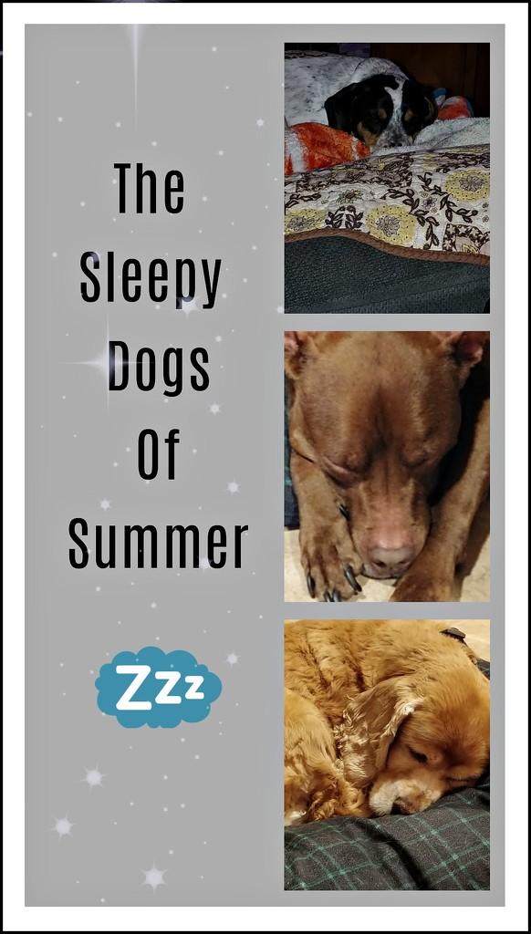 Sleepy Dogs by jo38