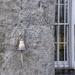 Dunsany door bell