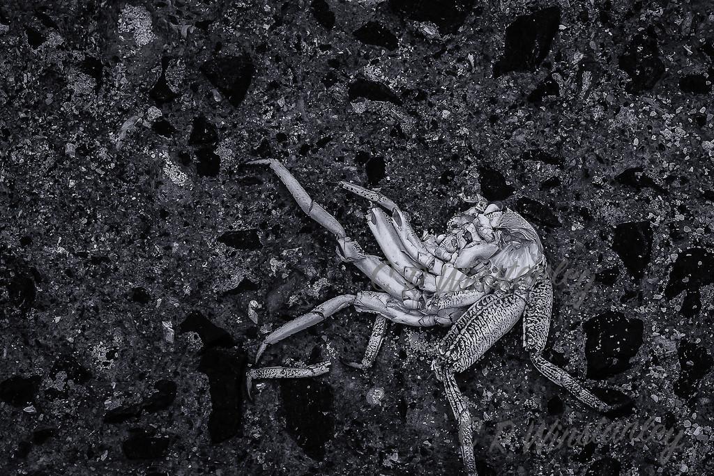 Crushed Crab by kipper1951