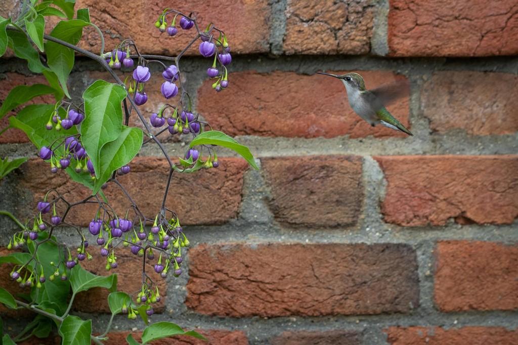 The Accidental Hummingbird by jyokota