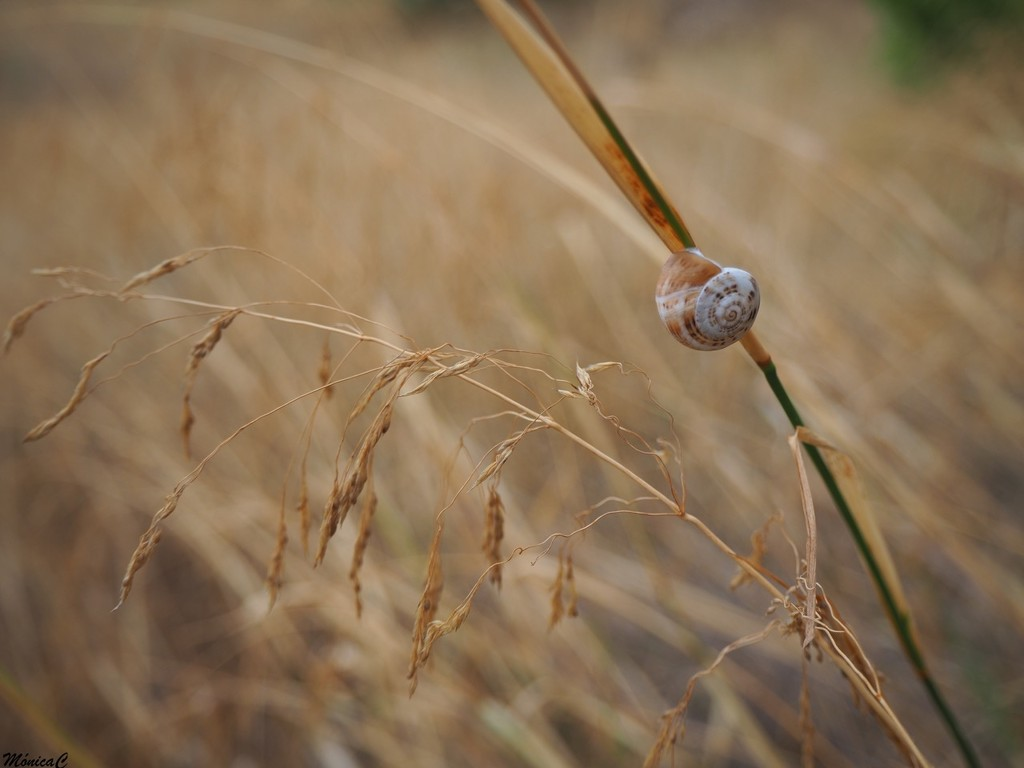 Snail by monicac