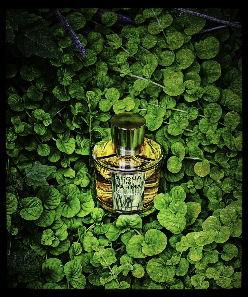 In the Green by gardencat
