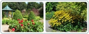 4th Sep 2019 - Bridgemere gardens -3