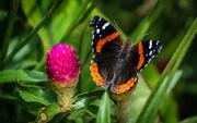 31st Aug 2019 - Brookside Gardens - Butterflies