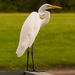 Egret on the Rail! by rickster549