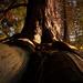 Roots by teriyakih