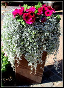 3rd Aug 2019 - Pretty pot of flowers, Roma St  Gardens