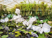 28th Aug 2019 - Ethereal White Persian Pond by Dale Chihuly