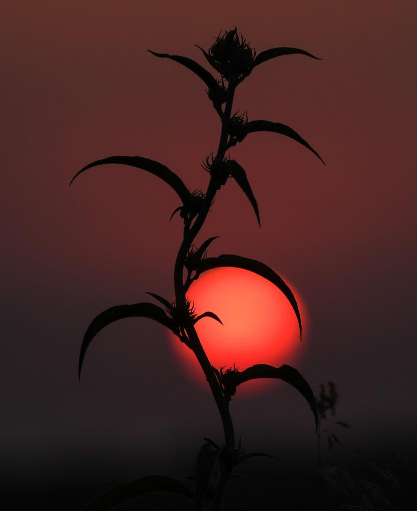 Kansas Sunrise 9-4-19 by kareenking
