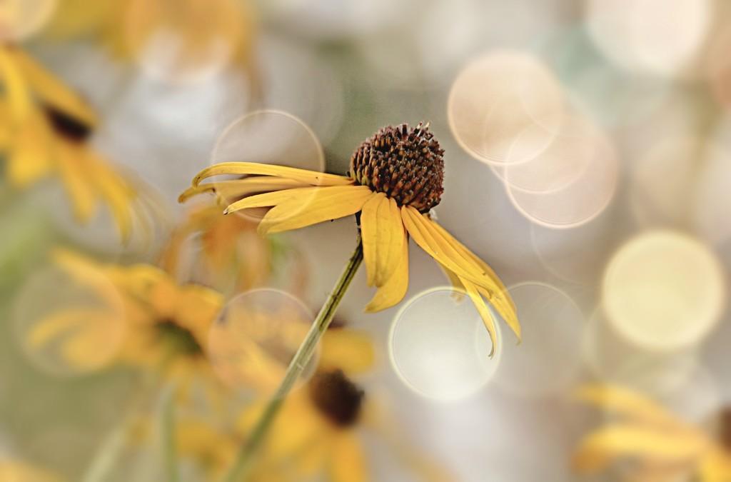 Flowery Bokeh by lynnz