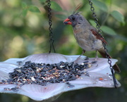 29th Aug 2019 - She's Molting