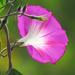 Delicate Bloom by seattlite