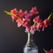 playing with my gladiolus by jernst1779