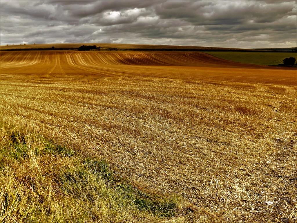 Harvest Home by ajisaac
