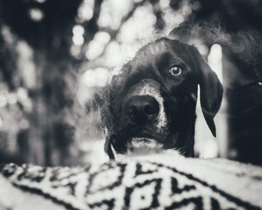 Doggie in the Window by mamazuzi