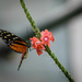 Orange and Black Butterfly by marylandgirl58