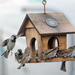 Its a wild ride at the birdhouse by maureenpp