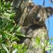 Hugo is hard to hide by koalagardens