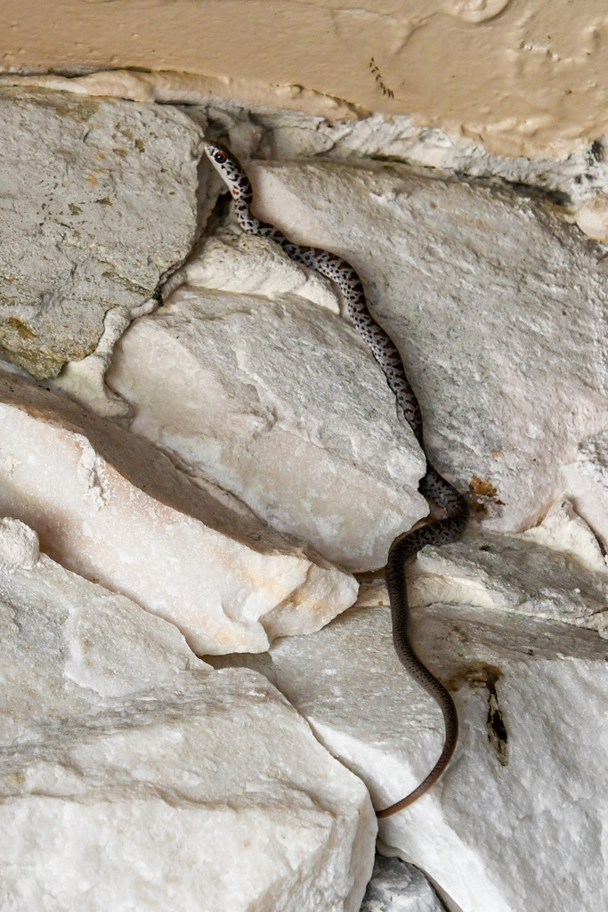 Snake by danette