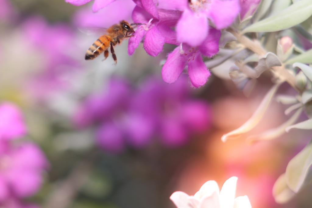 Pollination by judyc57