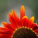 Bright Petals by gq
